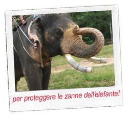 Materiale protettivo, anche per le zanne di elefante!