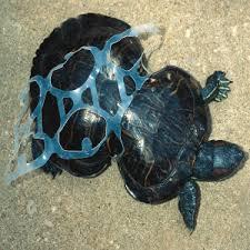 marine littering - tartaruga